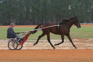 Morning workout at the Harness Track 3
