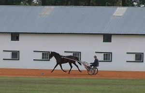 Morning workout at the Harness Track