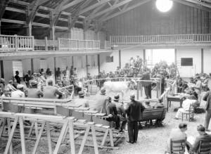 cattle sale inside fairbardn