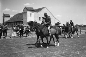 horse show fair barn 2