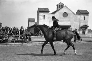 horse show fair barn 3