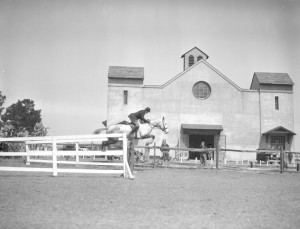 jumper at fair barn