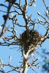 bird's nest (1)