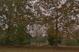 Fall in the Arboretum 2