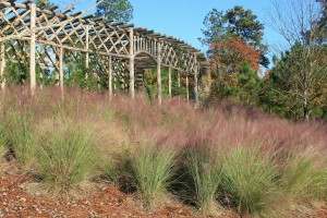 Muhlenbergia Grass at the Pavilion
